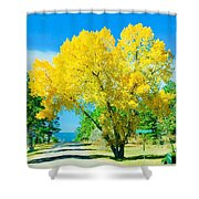 Woodmoor Shower Curtain