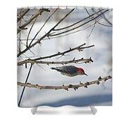 Woodpecker Diver Shower Curtain