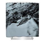 Woodpecker - El Salvador Shower Curtain