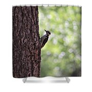 Woodpecker In New Mexico Shower Curtain