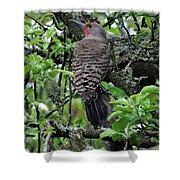 Woodpecker In The Apple Tree Shower Curtain