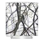 Woodpecker In The Forest Shower Curtain
