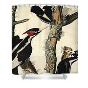 Woodpecker Shower Curtain