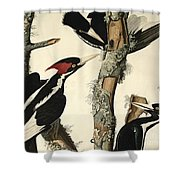 Woodpecker Shower Curtain by John James Audubon