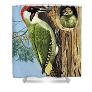 Woodpecker Shower Curtain by RB Davis
