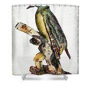 Woodpecker Red Heads Shower Curtain