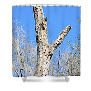 Woodpecker Was Here Shower Curtain