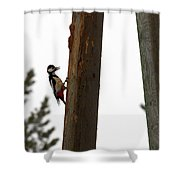 Woodpecker Workshop  Shower Curtain