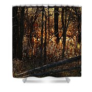 Woods - 1 Shower Curtain