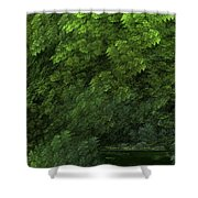 Woods And Stream Shower Curtain