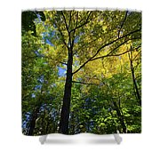 Woods In Nh Shower Curtain