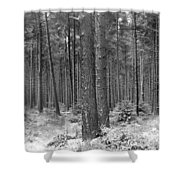 Woods In Winter, Slaley Shower Curtain