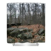 Woods Of Big Round Top Shower Curtain