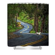 Woods Road 1 - Summer Shower Curtain