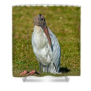 Woodstork On The Lookout Shower Curtain