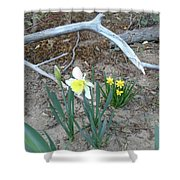 Woodsy Narcissus Shower Curtain