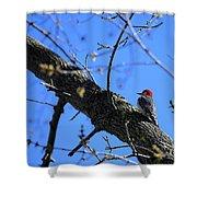 Woody Woodpecker Shower Curtain