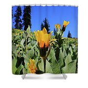 Woolly Mule's-ear At Lassen Park Shower Curtain