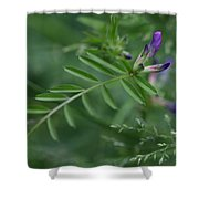 Woolly Vetch In Spring Shower Curtain