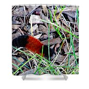 Wooly Bear 1 Shower Curtain