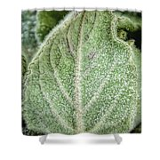 Wooly Mules Ear Shower Curtain