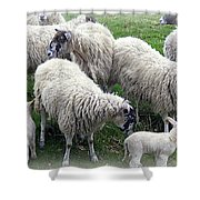 Wooly Times Shower Curtain