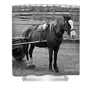 Work Horse And Cart Shower Curtain