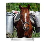 Work Horse At The Azores Shower Curtain