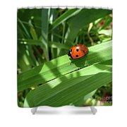 World Of Ladybug 1 Shower Curtain