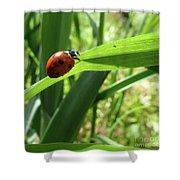 World Of Ladybug 2 Shower Curtain