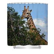 World's Tallest Mammal Shower Curtain