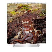 Worm Snake Shower Curtain