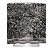 Wormsloe Plantation Shower Curtain