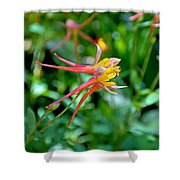 Wp Floral Study 3 2014 Shower Curtain
