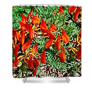 Wp Floral Study 6 2014 Shower Curtain