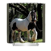 Wr The Big Son Of Bok #2 Shower Curtain