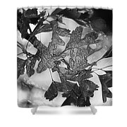 Wrapped Leaves Shower Curtain
