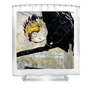 Wreathed Hornbill Perching Against Vintage Concrete Wall Backgro Shower Curtain