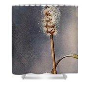 Wren And Cattails Shower Curtain