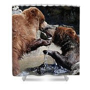 Wrestling Grizzly Bears In A Shallow River Shower Curtain