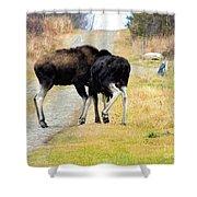 Amorous Moose Wrestling Shower Curtain