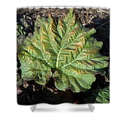 Wrinkled Green Rhubarb Leaf Shower Curtain