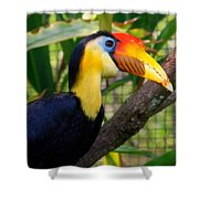 Wrinkled Hornbill Shower Curtain