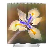 African Iris Shower Curtain