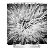 WX3 Shower Curtain