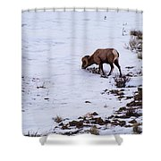 Wyoming Big Horn Shower Curtain