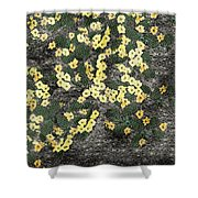 Wyoming Cactus Shower Curtain