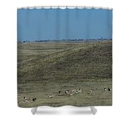 Wyoming Pronghorns Shower Curtain