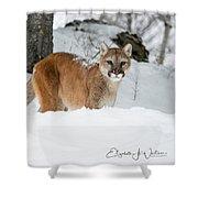 Wyoming Wild Cat Shower Curtain