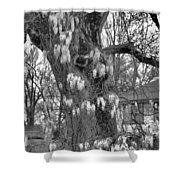 Wysteria Tree In Black And White Shower Curtain